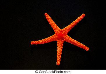 Wildlife Photos - Marine Life - A bright orange starfish ...