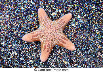 Wildlife Photos - Marine Life - A starfish on the seabed of ...