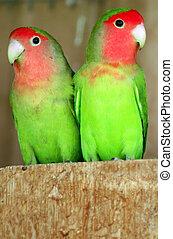 Wildlife Photos - Parrot