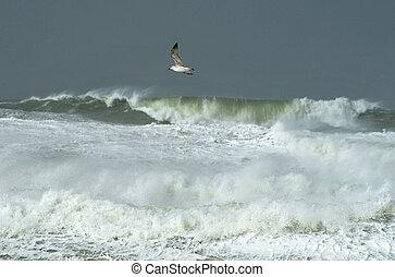 Wildlife Photos - Seagull