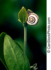 Wildlife Photos - Snail