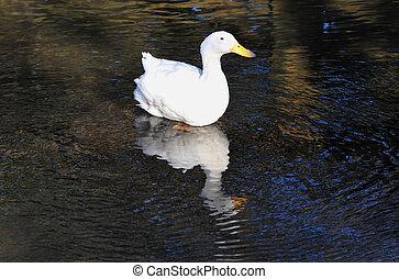 Wildlife Photos - Swan