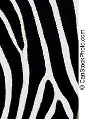 Wildlife Photos - Zebra