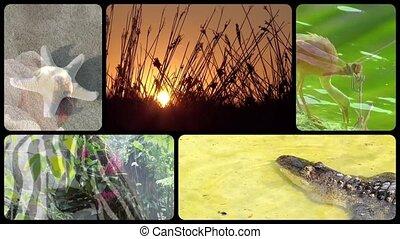 Wildlife poem - Tribute to wonderful earth collage