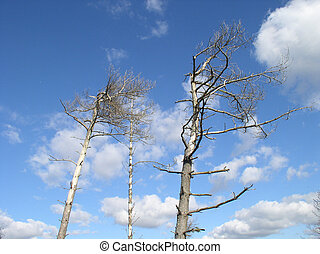 Wildlife reserve - Broken old tree on blue sky. Shot took in...