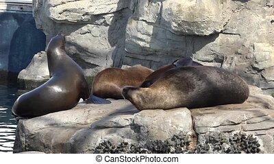 Wildlife Seals Resting In Nature