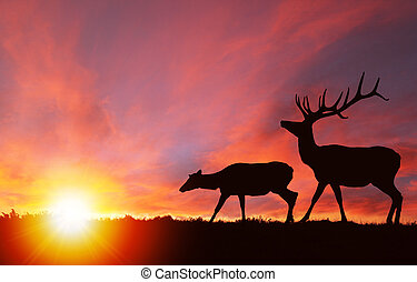 Wildlife Silhouette of Elks at Nature Sunset