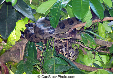 Wildlife - Snake sleeping in the tree