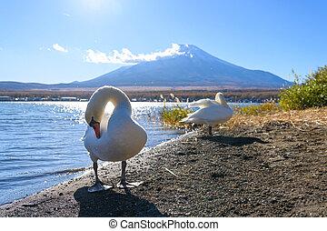 Wildlife swans at Lake Yamanaka against Fuji mountain in ...