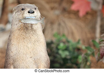 Wildlife - Taxidermy - Closeup shot of Taxidermied Wildlife