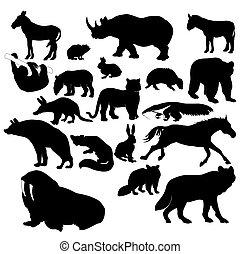 Wildlife - Illustration of wildlife animals