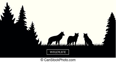 wildlife wolfs pack silhouette in the forest on the meadow black and white