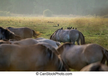 wildpferde, weiden, in, der, wiese, auf, neblig, sommer, morning.