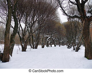Willow alley in the snow. Park Pokrovskoe-Streshnevo. Moscow
