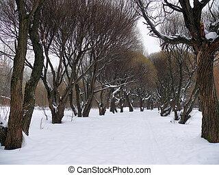 Willow alley in the snow. Park Pokrovskoe-Streshnevo. Moscow