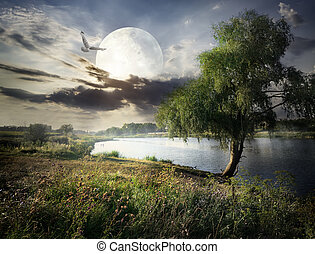 Willow and moon