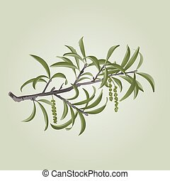 Willow branch with catkins vector.eps