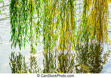 Willow Branches close to Water in Autumn