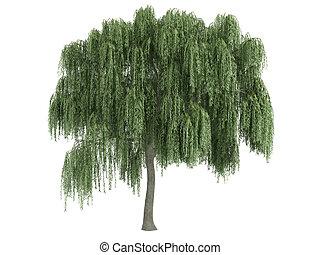 willow, eller, salix