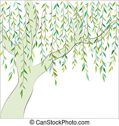 Willow. Graphic design. Vector background - Willow tree....