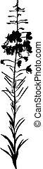 Willow-herb flower
