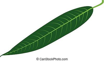 Willow - leaf vector illustration ,