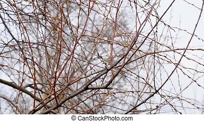 Willow on a background of blue sky