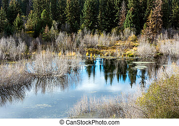 Willow ponds