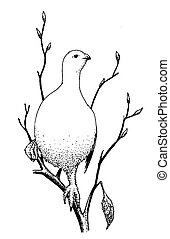 Willow Ptarmigan - winter Lagopus lagopus Pen-and-Ink...