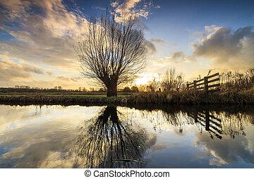 Willow sunset