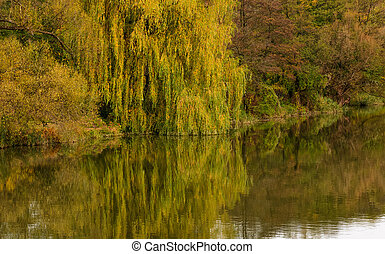 willow tree above the calm river in autumn. beautiful nature...