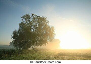 Willow tree at dawn