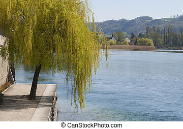Willow tree by a river in Stein am Rhein, Switzerland