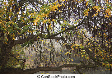 Willow tree in fall colors