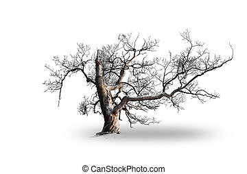 Old bare willow tree in snow isolated on white