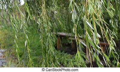 willow tree move wind