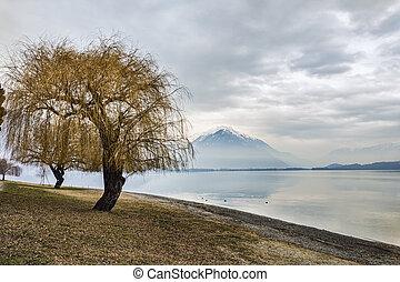 Willow tree on Lake Como