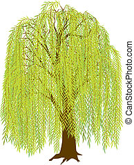 Vector illustration of a weeping willow tree. Leaves are arranged in several layers, can be removed for a different look.
