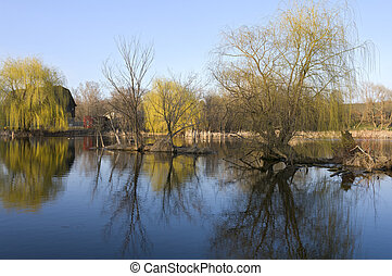 Willow Trees and Reflections on Pond