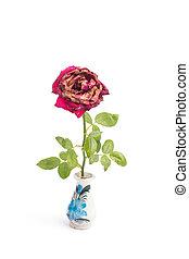wilted, isolado, vaso, rosas, fundo, branca