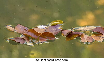 wilted leaves on the lake water