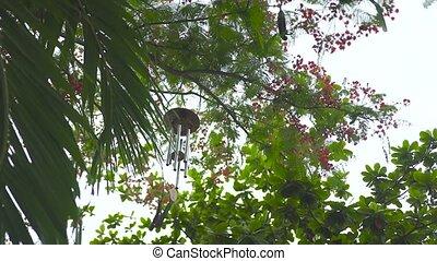 Wind bell hanging on tree in summer garden. Feng shui wind...