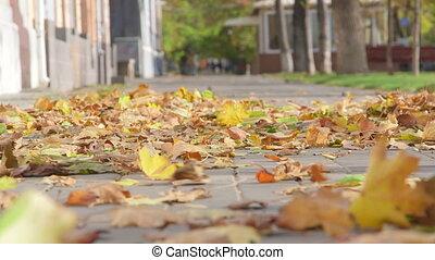 Wind blowing autumn leaves on the sidewalk