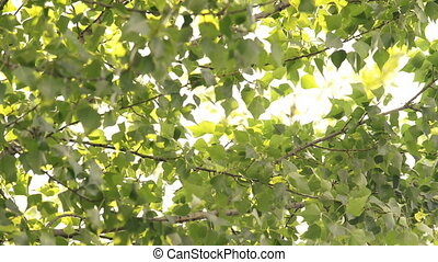 Wind blowing leaves of a tree