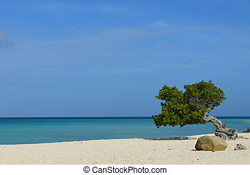 Tropical waters off shore with a divi divi tree in the foreground.
