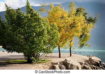 Wind blown trees at Riva Del Garda on the shore of Lake Garda Italy