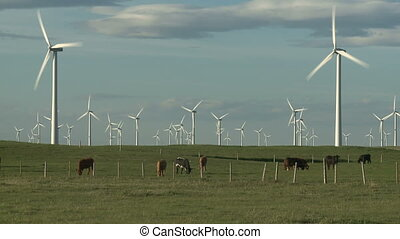 Wind Farm and Cattle