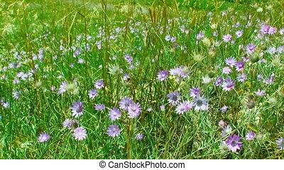 Wind Flowers Swaying On Wind