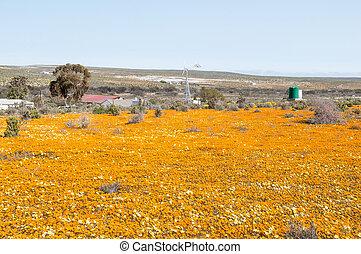 Wind generator in a sea of wild flowers