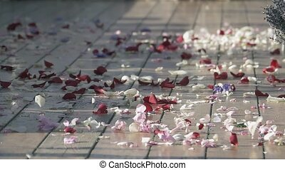Wind get up beautiful petals of rose flowers on street. White and red. Summer sunny day. Cold shades